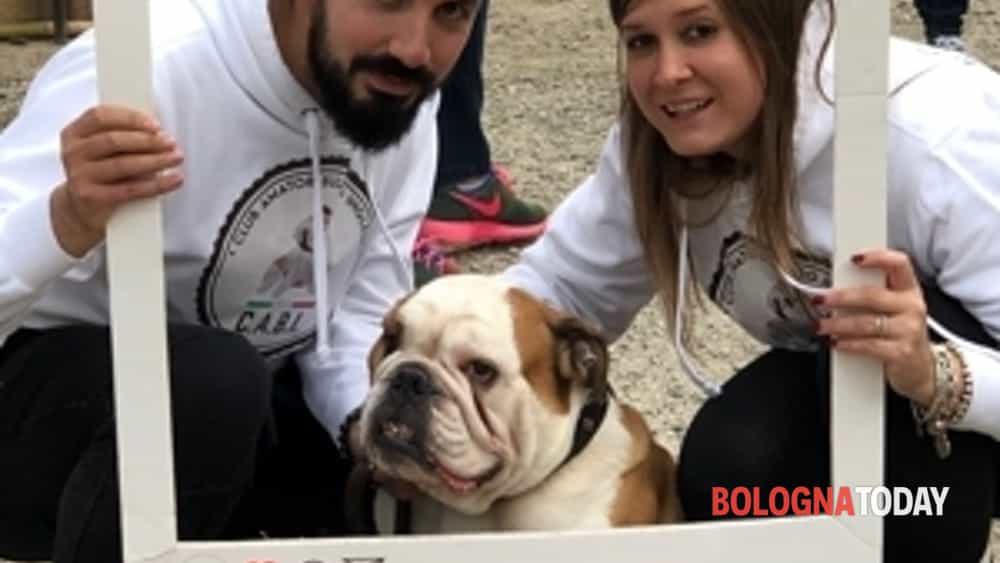 record italiano per il 22° #bulldogday del cabi, a bologna ben 230 bulldog inglesi da tutta italia-3
