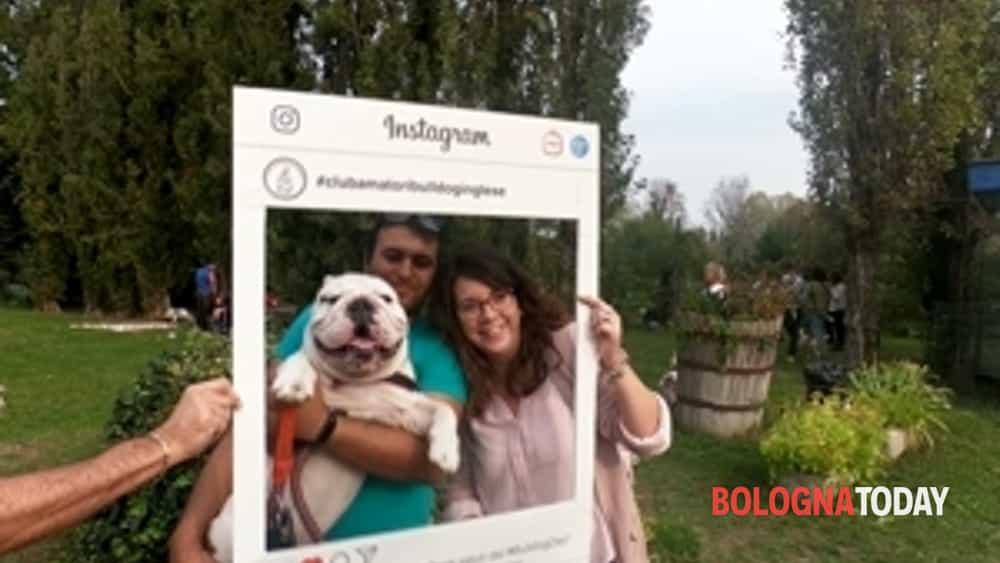 record italiano per il 22° #bulldogday del cabi, a bologna ben 230 bulldog inglesi da tutta italia-6