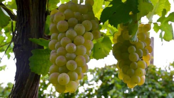 Degustazioni a Dozza: un pomeriggio dedicato a RebolaeFamoso