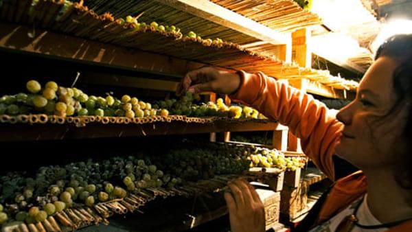 Appuntamenti enologici alla Rocca di Dozza: il programma di settembre