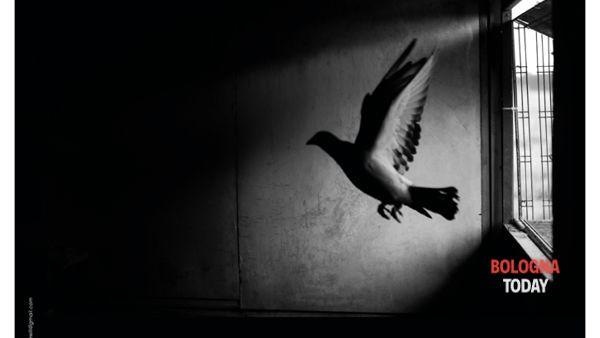 """Un battito d'ali"": mostra fotografica di Francesco Ruffoni"