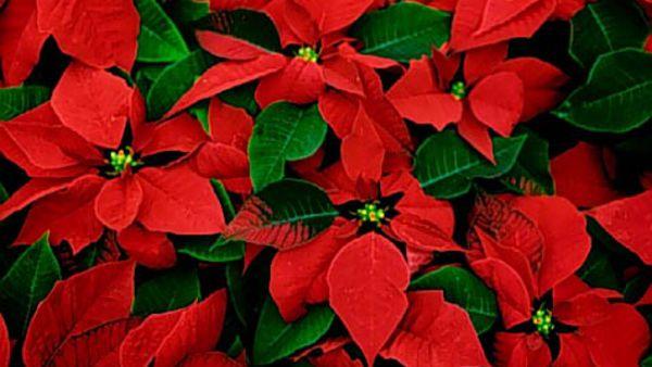 """Christmas Village"" a Pian di Macina"