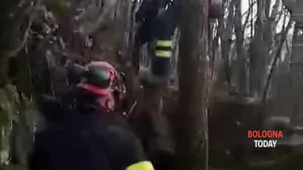 VIDEO| Cani incastrati in un cunicolo, pompieri e Carabinieri sul posto