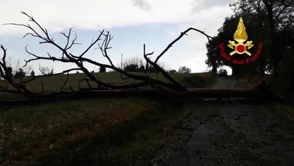 Maltempo, alberi divelti per raffiche di vento: decine di interventi nel Bolognese | VIDEO
