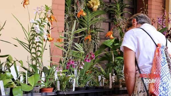 Orchibo 2019: il paradiso delle orchidee