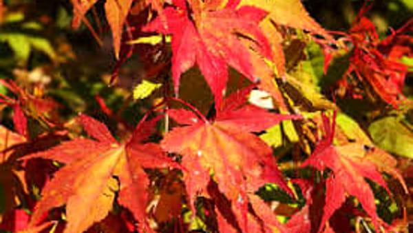 """""""I colori dell'autunno - Arte, cibo, cultura e passione a Imola"""""""