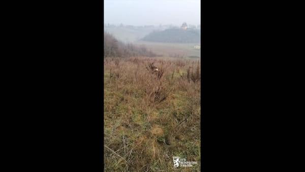 Cucciolo di capriolo a spasso per la scuola: catturato da polizia provinciale | VIDEO