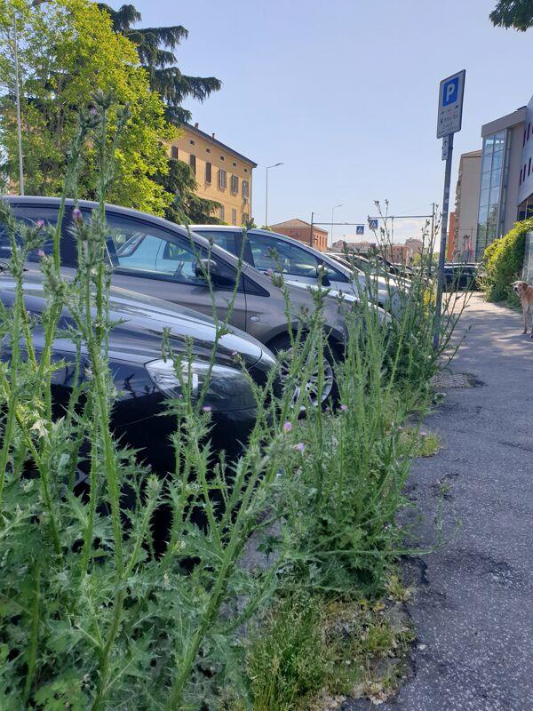 Sfalcio delle erbacce per le strade, il Comune 'assolda' l'aceto