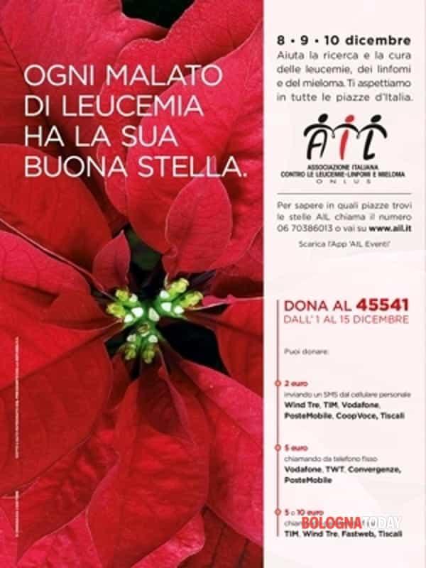 Stelle Di Natale Immagini.Stelle Di Natale Ail In Vendita A Bologna E Provincia