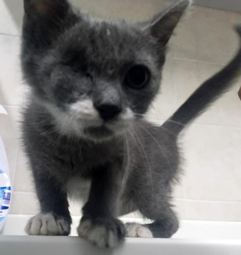 Serafina gatto-2
